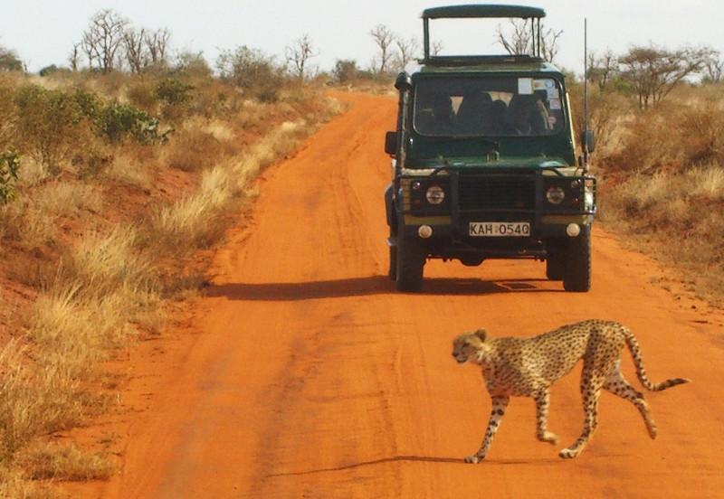 Safari (źródło: http://hr.wikipedia.org/wiki/Safari)